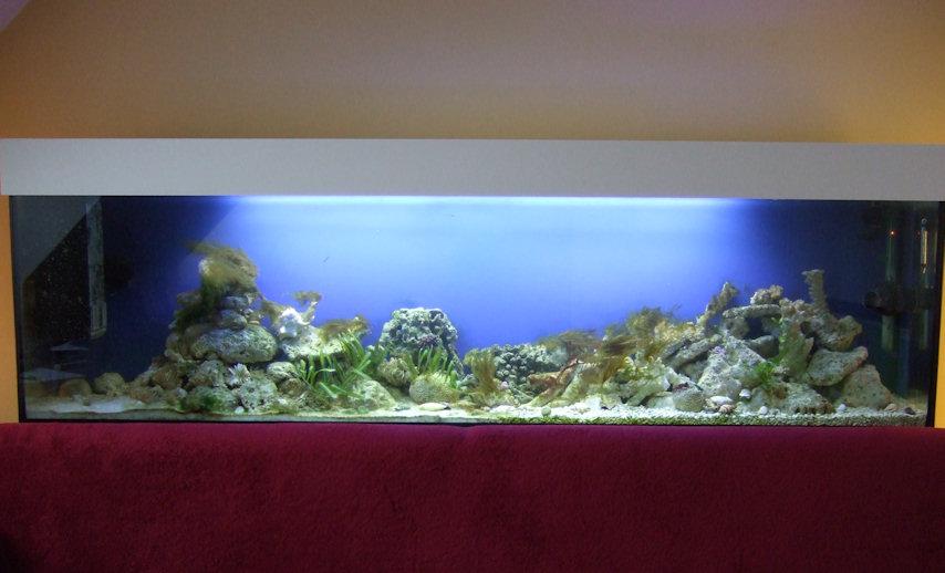 aquareef mein meerwasser aquarium die gr nalgen gehen langsam zur ck. Black Bedroom Furniture Sets. Home Design Ideas