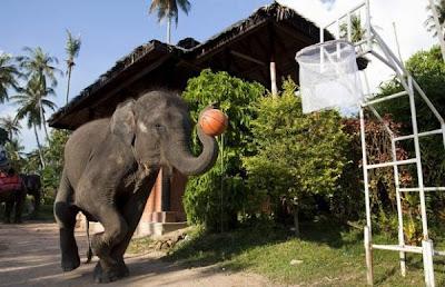 Elefánt sport