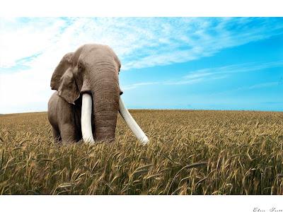 Elefántos háttér