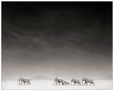 NICK  BRANDT-Elefánt