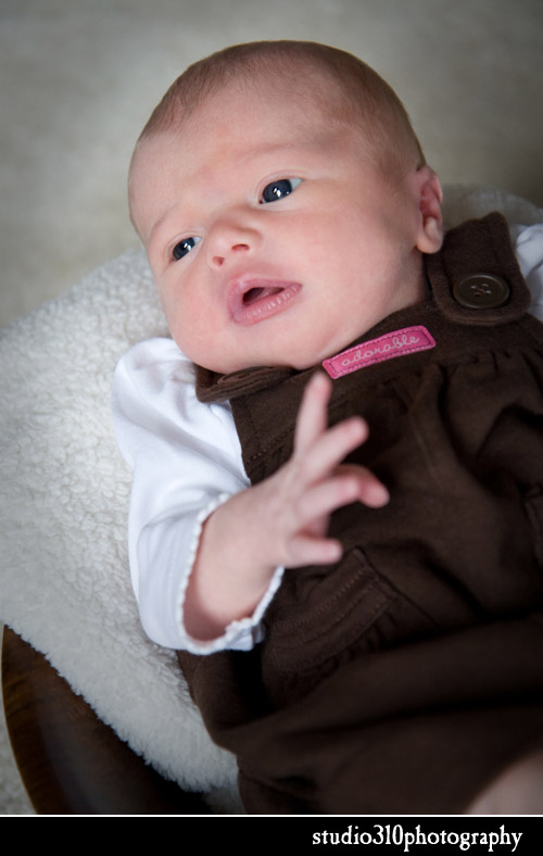 newborn portraits by amanda ward dengler in raleigh north carolina