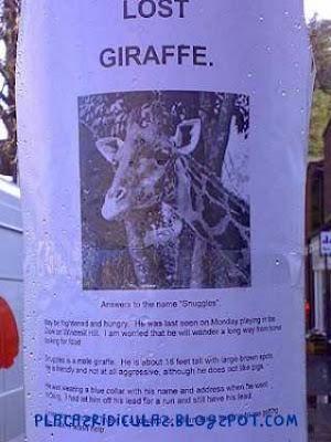 Letreiros Ridículos Girafa+perdida