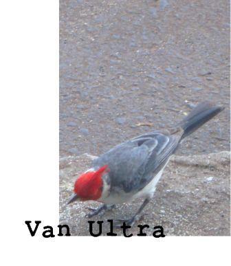 Van Ultra