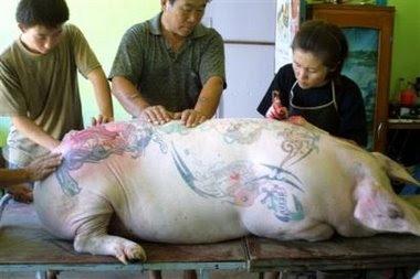 A Nice, une exposition de cochons tatoués fait scandale