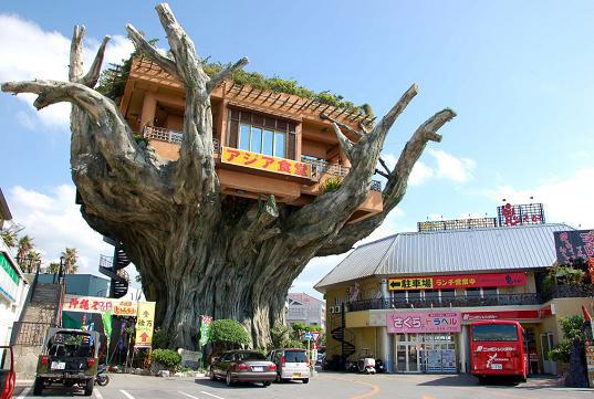[okinawa-restaurant.jpg]