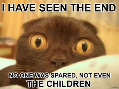 Funny Pictures Funny+cat+01