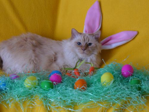 [easter+cat+10]