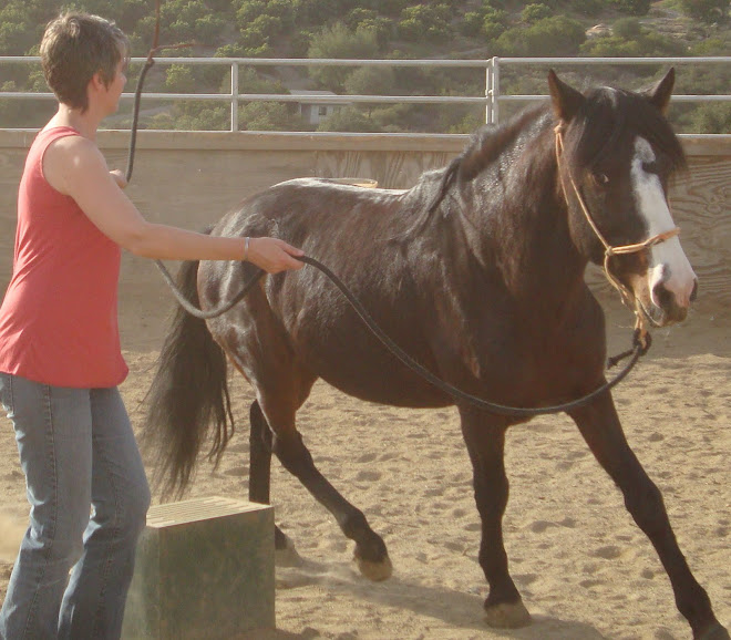 Kelsey working Sultan, a 10 yr old peruvian stallion