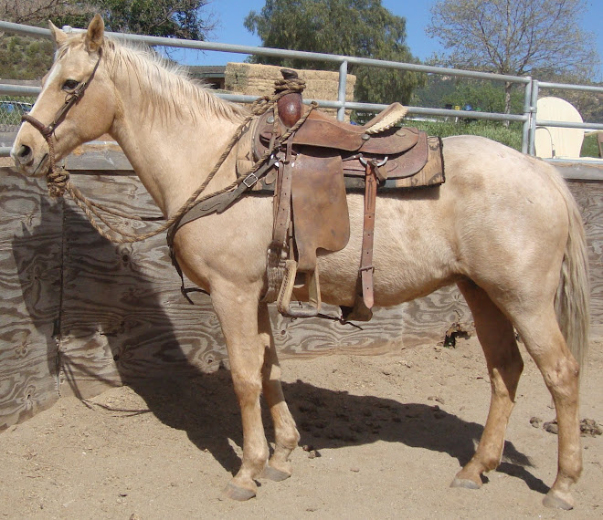Graceful Gold, 17 yr old reg. palomino - UPDATE, adopted!