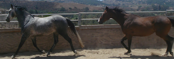 Tejon and Tango in the roundpen