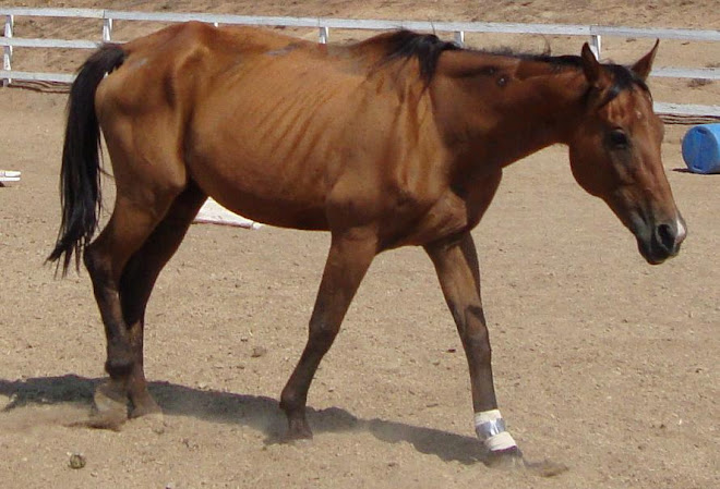 Emaciated mare, doing better