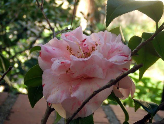 [flower1]