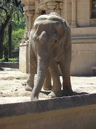 Hola! Soy el elefante