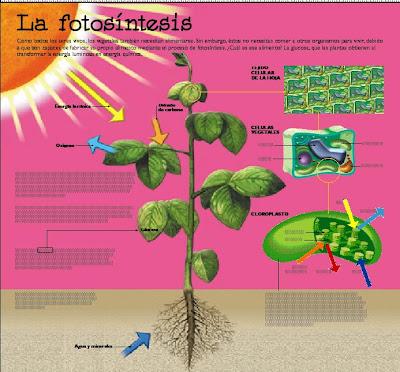 La Tierra - Modificación del Clima --> (Chemtrails + Capa de Petroleo en los Oceanos) Fotosintesis