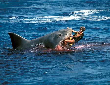 Beauty 3d Shark