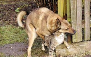Animals Fornicating: Dog humping a Cat