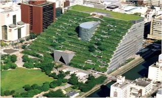 Catalogo de plantas para techos verdes pdf