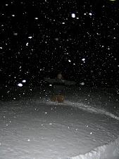 Yea!!! more snow!!!