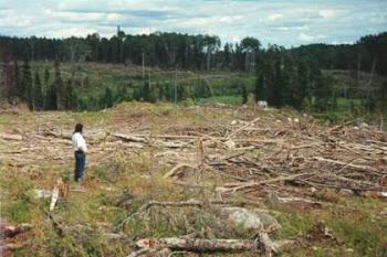 deforestacion de bosques