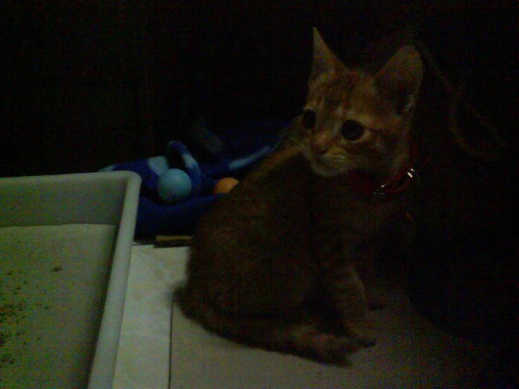 Olha o Chang quando chegou em 03 de julho de 2009.