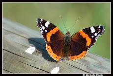 Eluana , Johnny e la farfalla