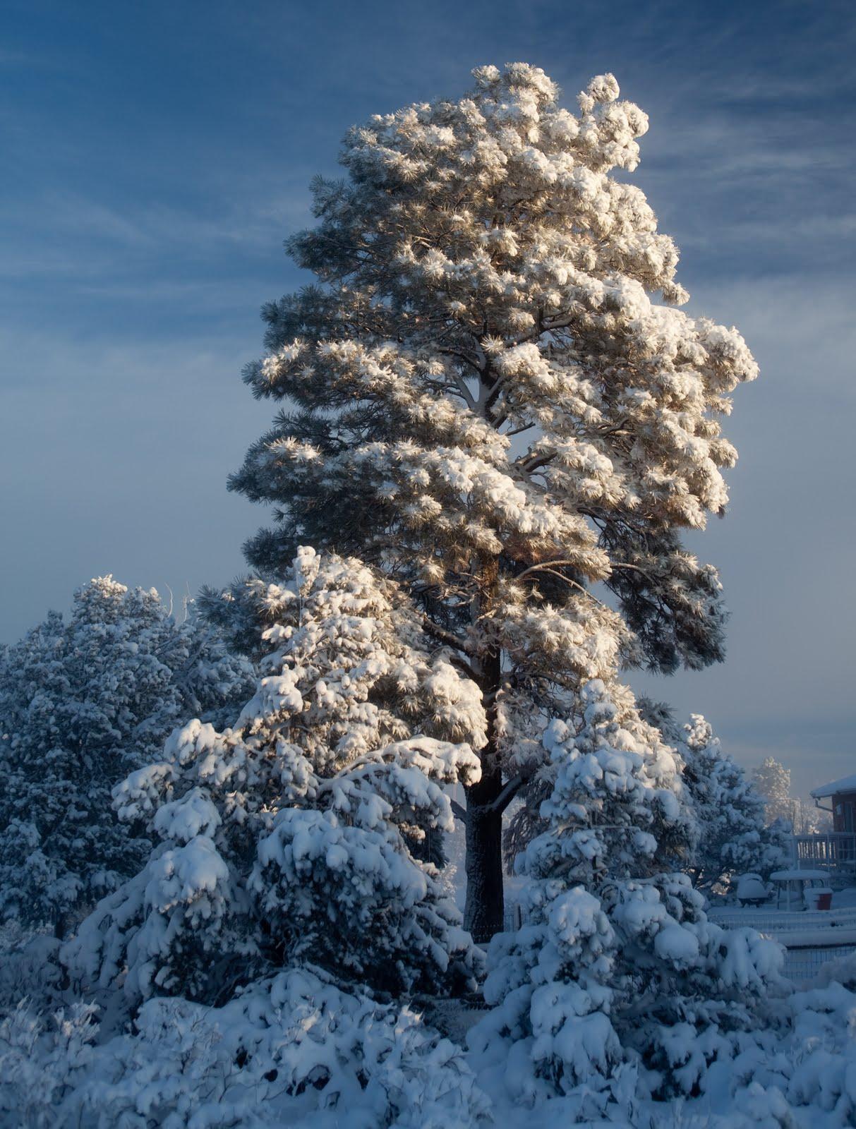 [10March-march_snow-004.jpg]