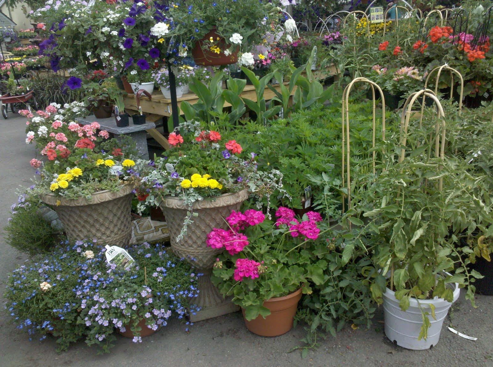 Twigs and scraps ideas for nesting merrifield garden for Idea center dilshad garden