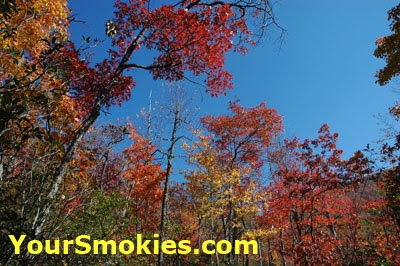 This Rain is good for the 2008 fall leaf season in the Smokies, but when is the peak leaf season?