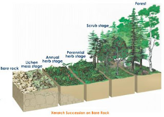 biology essay succession Succession climograph tropical dry forest savanna  use the last pages of this document for additional information concerning essays for the ap biology exam.