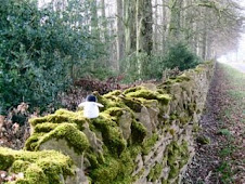 Walking the stone walls in the UK