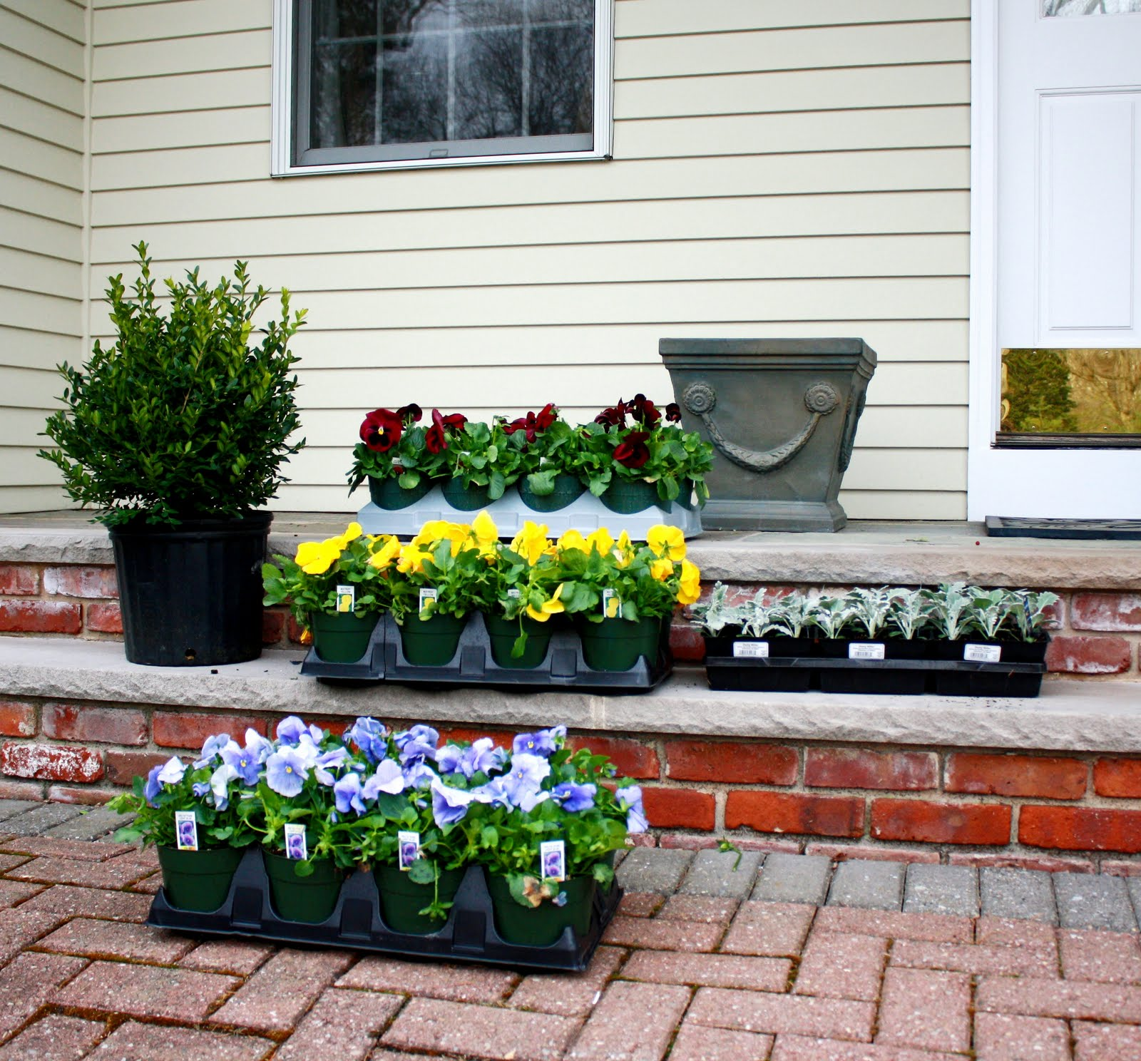 Pot Plants For Front House Home Safe