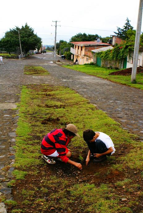 Jero y Theo checando árboles