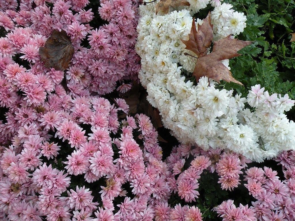 http://2.bp.blogspot.com/_vr38bDEOIq8/TF_wRVQfoxI/AAAAAAAAAUM/toKnZVxlWiw/s1600/wallpaper_fiori.jpg