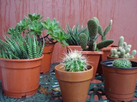 Tejiendo pintando y mas cactus en el feng shui for Flores para el hogar feng shui