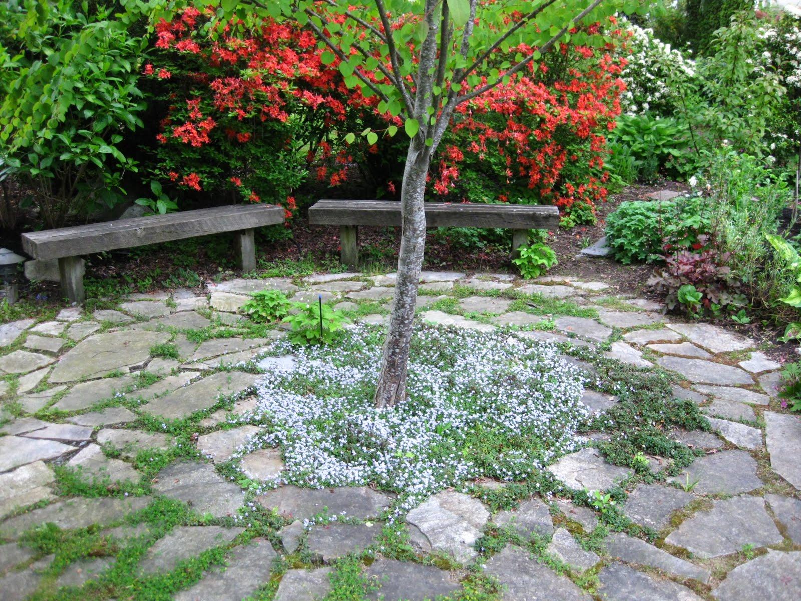 The Bicycle Gardening Chronicles Flagstone Around Tree