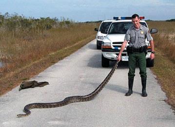 Image result for big snake Texas