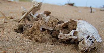 Dood Botten Skelet - H.B