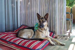 My dear German Shepherd Lobie.