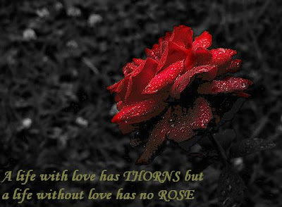 essay on no roses without thorns Yet we hope to be one without the other – a rose without a thorn we forget our agreement no rose without thorns tweet by sue frederick / make a comment.