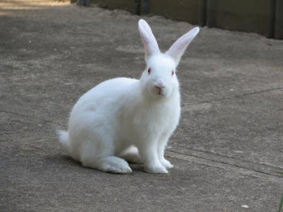 Monmouth, NJ man fined $2K for releasing pet rabbit into wild