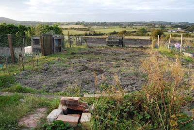 Allotment at Earwig Corner, Lewes