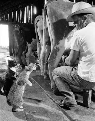 funny farm cats