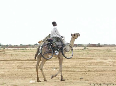 Camel with bike