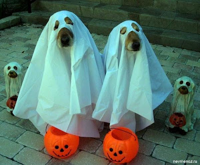 halloween funny dogs