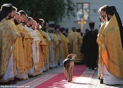 Saint dog