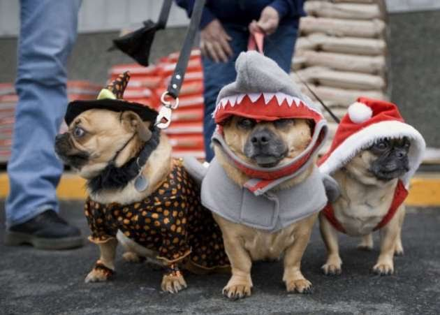 funny cats and dogs pics. Funny Dogs And Cats Together.