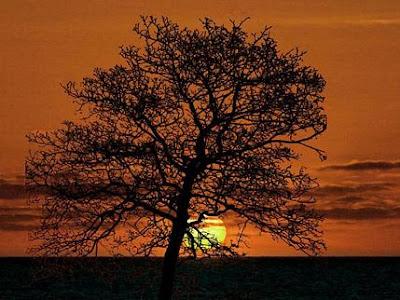 Los Huéspedes Felices - Sol De Invierno