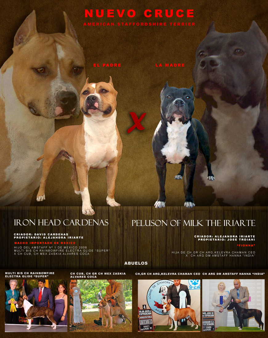 THE IRIARTE KENNEL: CACHORROS DISPONIBLES DEL SERVICIO DE IRON HEAD ...