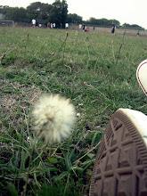 las malas hiervas somos asi de bonitas