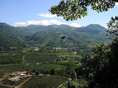 Orosi coffee plantations